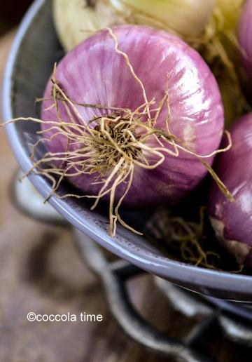 cipolla 1