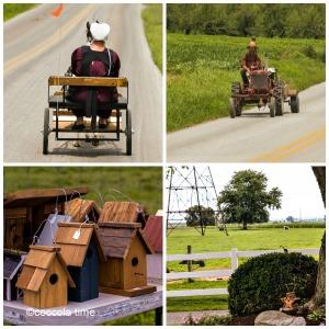 Amish, cookies e il Paese dalle grandi opportunita'