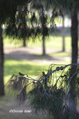 giardini del turia1